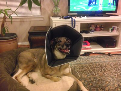 He's not acutally that happy to have the cone on