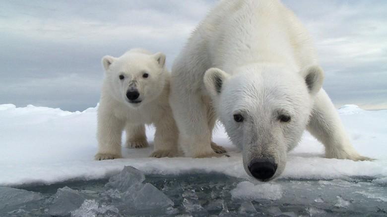 Think of the Polar Bears
